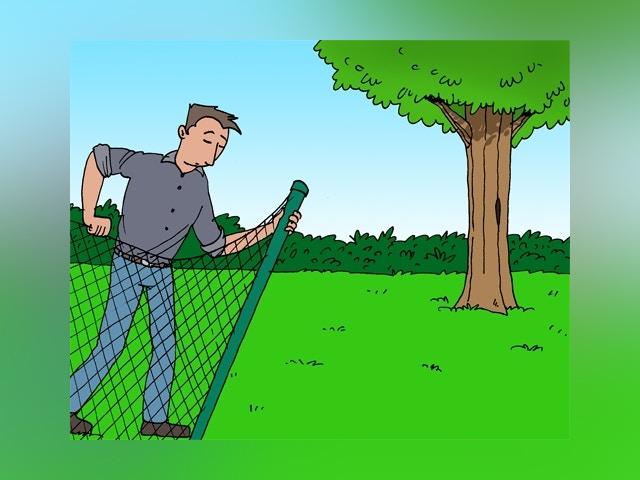 6224 abattage d'arbres
