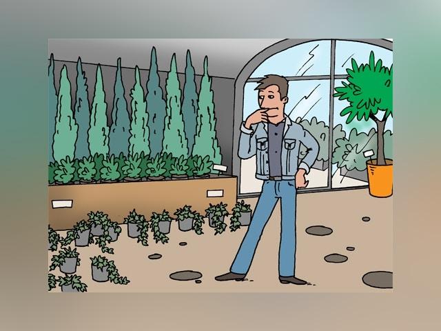 8805 klimop planten