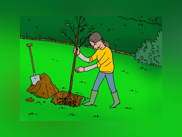 9766 La plantation d'arbres
