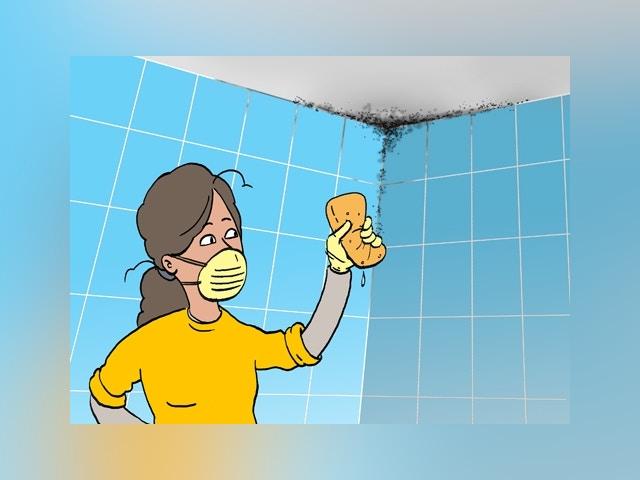 11490 Mold trouve dans la salle de bain et de combat