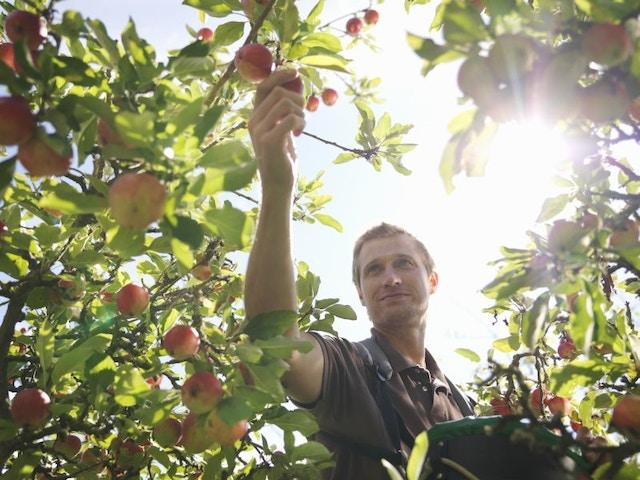fruitboom tuin moestuin appelboom