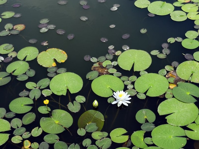 Jardin nouvelle vie étang