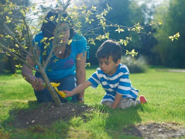 boom planten tuin