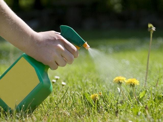 Onkruid bestrijden tuin herbiciden paardenbloem gazon