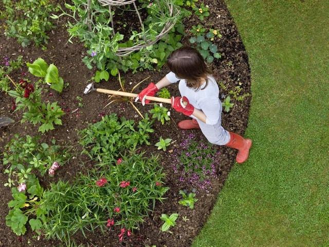 Jardin plantes de bordure plantes couvre-sol mauvaises herbes