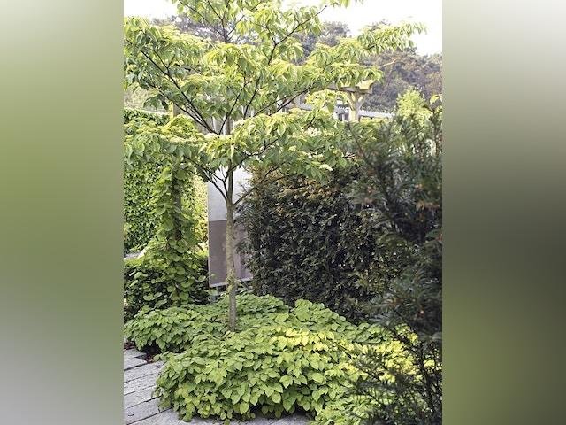 boom bomen tuin stadstuin