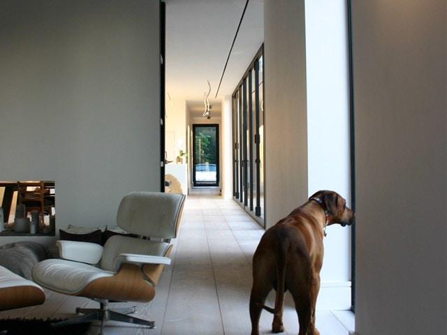 verwarming luchtverwarming hond