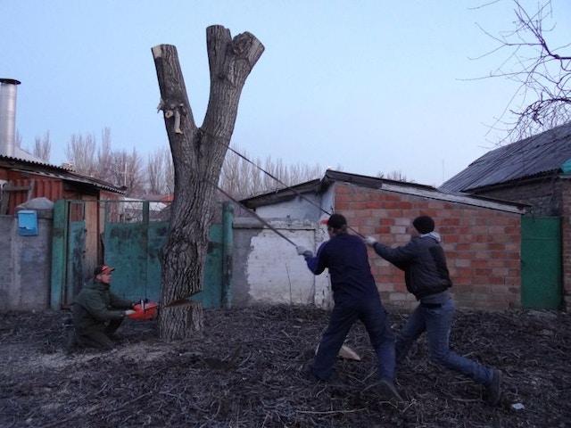 l'abattage des arbres abattre